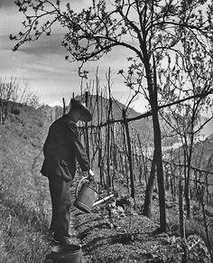Herman Hesse nel suo orto a Montagnola